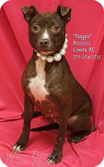 Pit Bull Terrier Mix Puppy for adoption in Newnan City, Georgia - Maggie