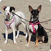 Adopt A Pet :: Penny and Peanut - Holiday, FL