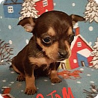 Adopt A Pet :: Atom - Niagra Falls, NY