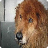 Adopt A Pet :: A421663 - San Antonio, TX