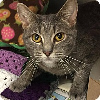 Adopt A Pet :: Shy - Hendersonville, NC