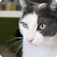 Adopt A Pet :: Don Juan - Los Angeles, CA