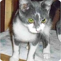 Adopt A Pet :: Alvin - Odenton, MD