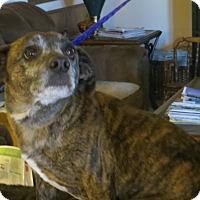Adopt A Pet :: Bongo - McLoud, OK