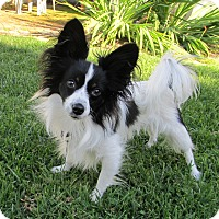 Adopt A Pet :: Bandit - San Diego County, CA