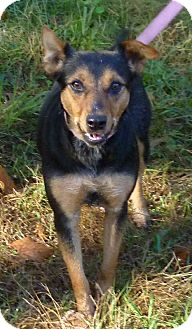 Terrier (Unknown Type, Medium)/Doberman Pinscher Mix Dog for adoption in Livingston, Texas - Franny