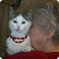 Adopt A Pet :: Felicia - Picayune, MS