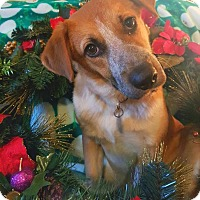 Adopt A Pet :: Raelynn - Huntsville, AL