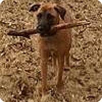 Adopt A Pet :: Harper - Ball Ground, GA