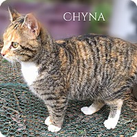 Adopt A Pet :: Chyna - Columbia, TN