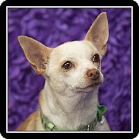 Adopt A Pet :: Charlotte - San Diego, CA