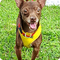 Adopt A Pet :: Coco - Houston, TX
