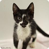 Adopt A Pet :: Mr. Popper - Los Angeles, CA