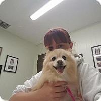Adopt A Pet :: Talulah - El Cajon, CA