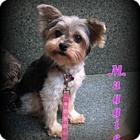 Adopt A Pet :: Maggie - Denver, NC