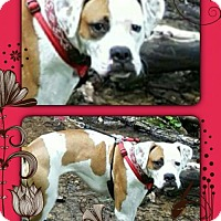 Adopt A Pet :: Molly- Family Dog - Genoa City, WI
