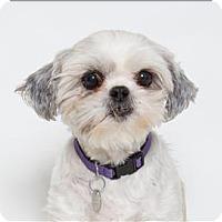 Adopt A Pet :: Rosalynn - San Luis Obispo, CA