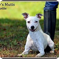 Adopt A Pet :: Dottie - Dixon, KY