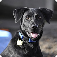 Adopt A Pet :: Buddy - Woodburn, OR