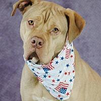 Adopt A Pet :: Leonidas - Allen town, PA
