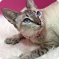 Adopt A Pet :: Sophia - Pasadena, TX