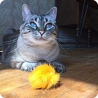 Adopt A Pet :: Ingmarie - Seattle, WA