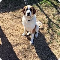 Adopt A Pet :: Cody - McKinney, TX