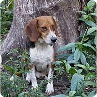Adopt A Pet :: Willie - Palm Bay, FL