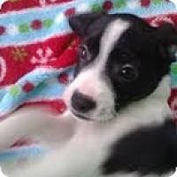 Adopt A Pet :: Moby - Staunton, VA
