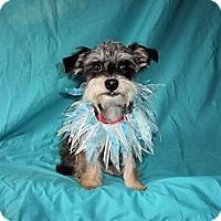 Adopt A Pet :: Rolo - Mooy, AL