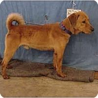 Adopt A Pet :: Teddy/Pending - Zanesville, OH
