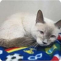 Adopt A Pet :: Mia - Sterling Hgts, MI