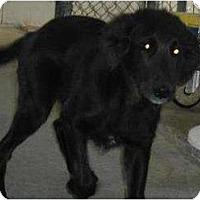 Adopt A Pet :: Roper - Denver, CO