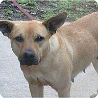 Adopt A Pet :: Sonya - Chicago, IL