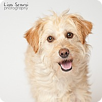 Adopt A Pet :: Murphy - Los Angeles, CA