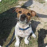 Adopt A Pet :: Buck - Lockhart, TX