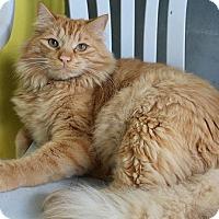 Adopt A Pet :: Mister - Newport Beach, CA