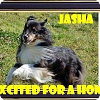 Adopt A Pet :: Jasha - COLUMBUS, OH