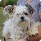 Adopt A Pet :: Fiona (Has application)
