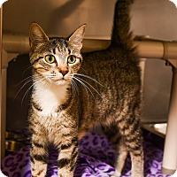 Adopt A Pet :: Suzy - Athens, GA
