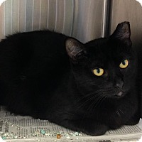 Adopt A Pet :: Holly - East Brunswick, NJ