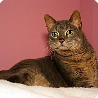Adopt A Pet :: Bettie - Milford, MA