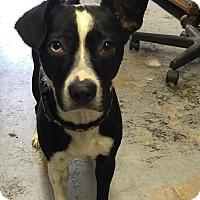 Adopt A Pet :: Wizard - La Verne, CA