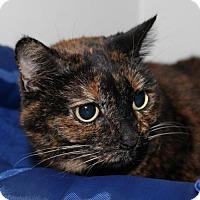 Adopt A Pet :: Stacie - Grass Valley, CA