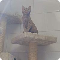 Adopt A Pet :: Kiwi - Chippewa Falls, WI