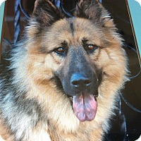 Adopt A Pet :: LASEY VON LASSAN - Los Angeles, CA