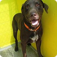 Adopt A Pet :: Diesel - Redding, CA