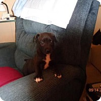 Adopt A Pet :: Daisy - currently in foster - Roanoke, VA