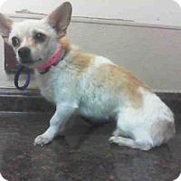 Adopt A Pet :: *SOPHIE - Las Vegas, NV