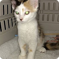 Adopt A Pet :: Madison - Savannah, GA